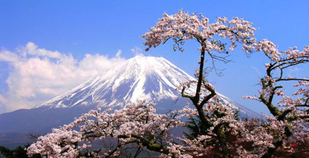 Mt. Fuji & Sakura