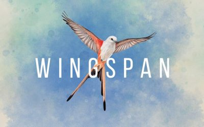 Elizabeth Hargrave's Wingspan Lets Your Tabletop Take Flight