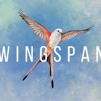 Elizabeth Hargrave's Wingspan Lets Your Tabletop Take Flight